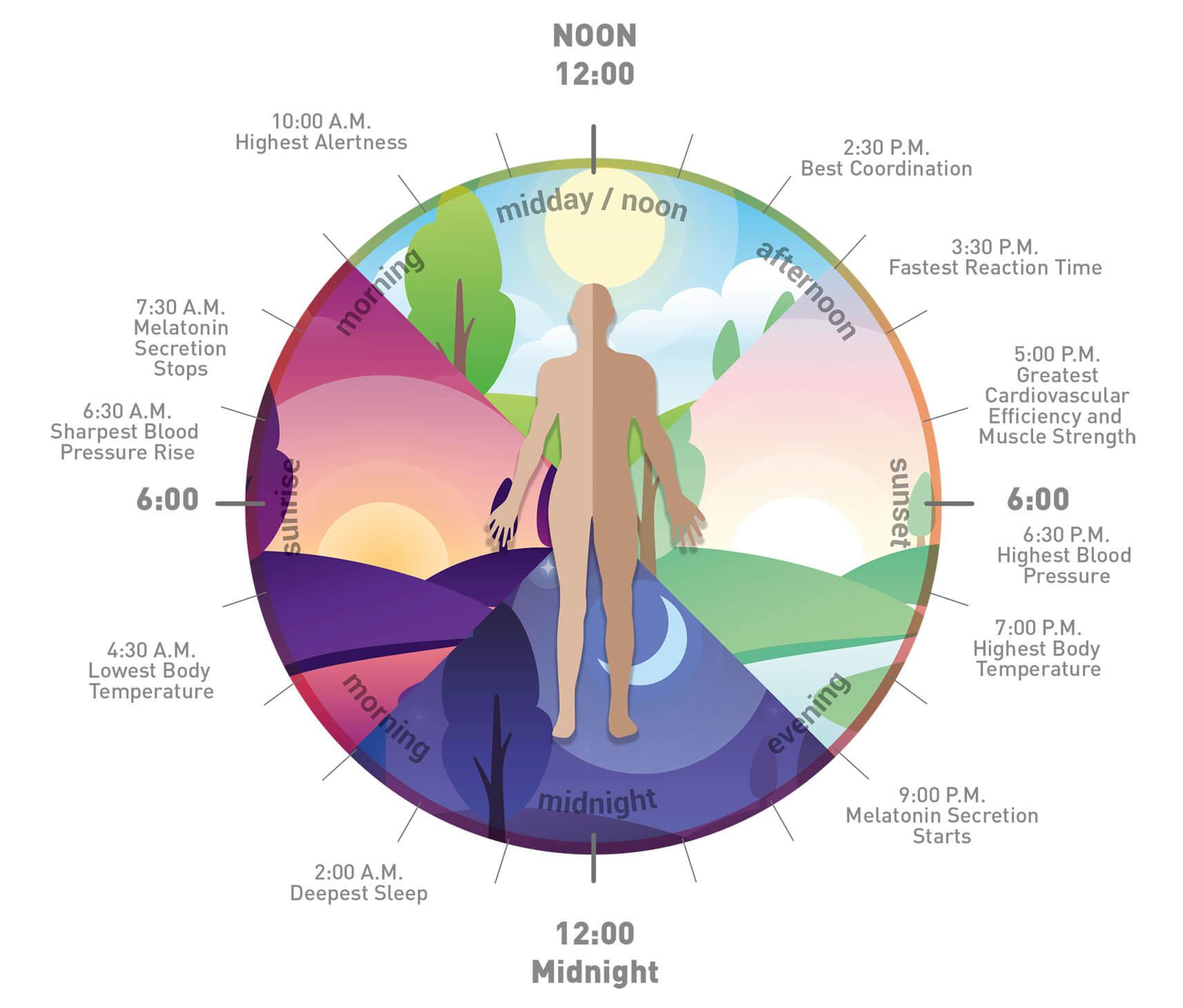 circadian rhythm jetlag